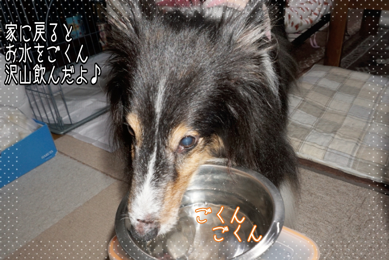 2014-10-09-20-06-29_deco.jpg