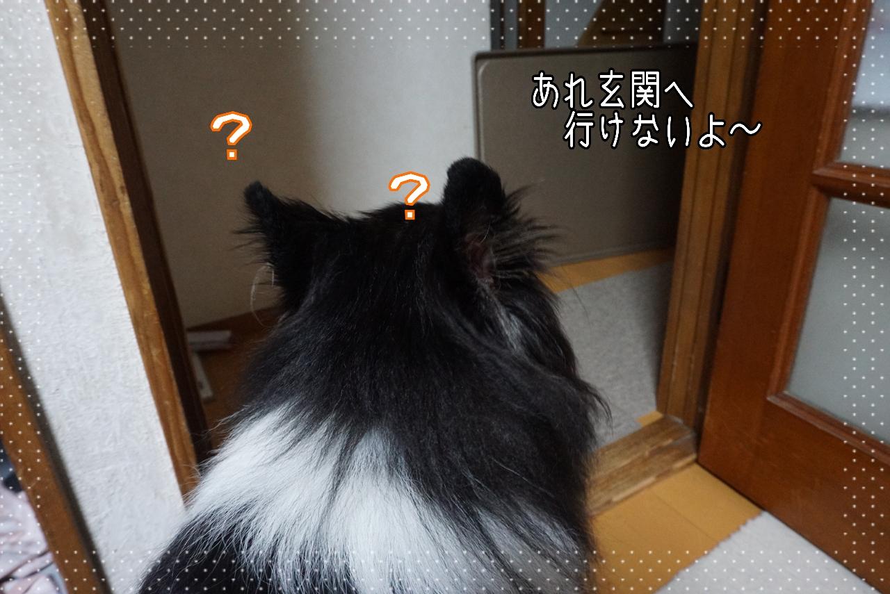 2014-10-09-20-35-29_deco.jpg