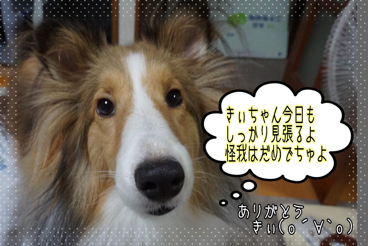 2014-10-12-07-54-39_deco.jpg