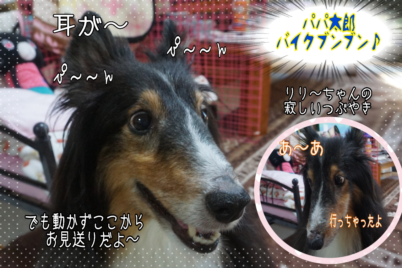2014-10-14-07-52-34_deco.jpg