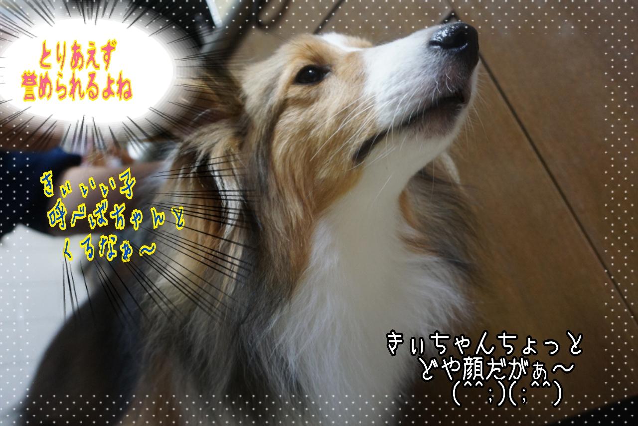 2014-10-21-01-32-26_deco.jpg