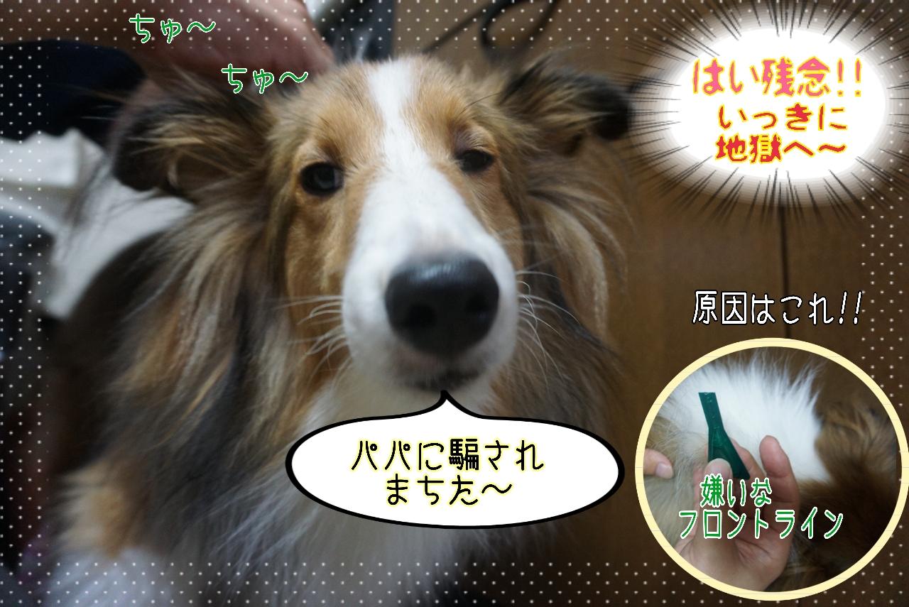 2014-10-21-01-38-33_deco.jpg