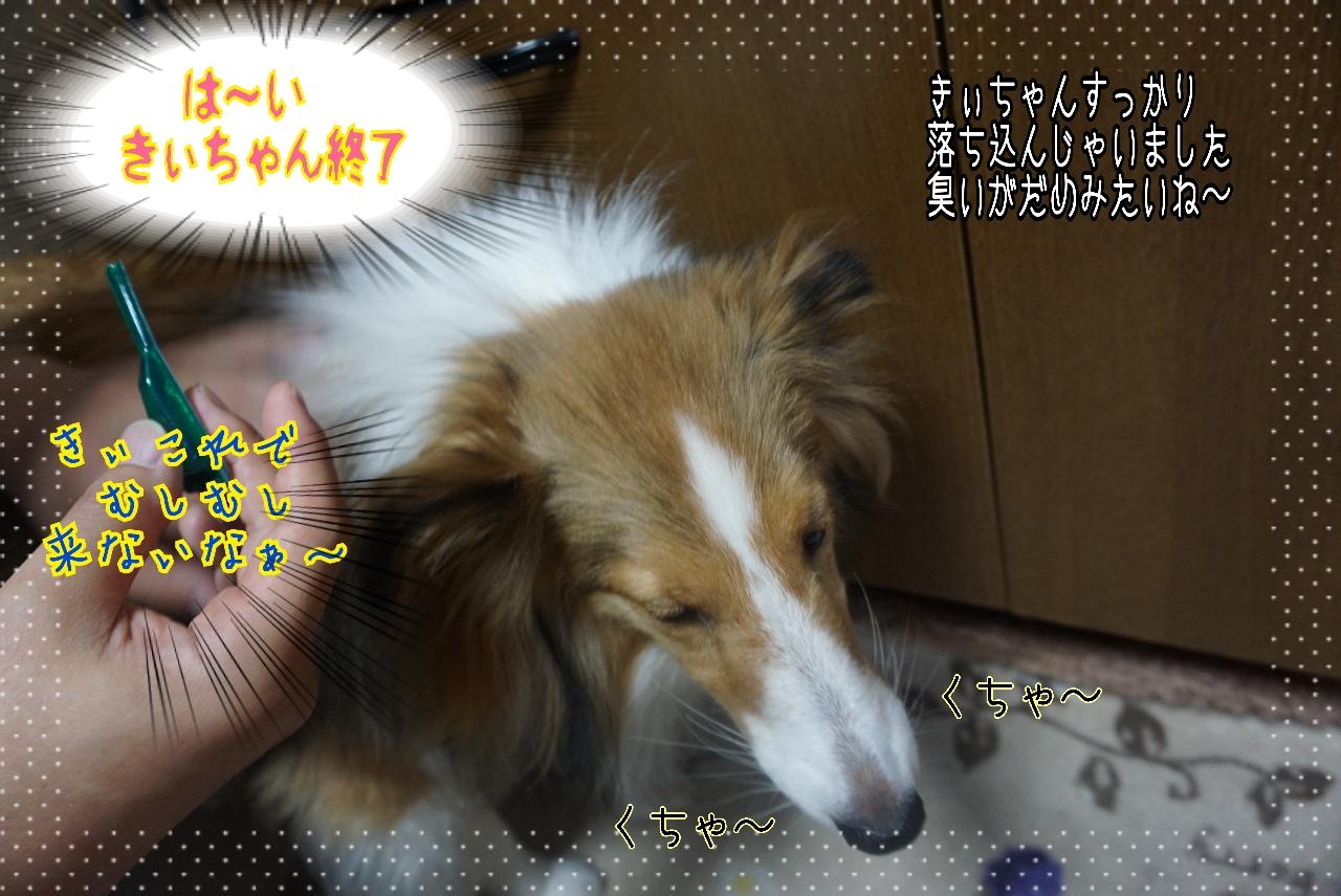 2014-10-21-01-46-48_deco.jpg