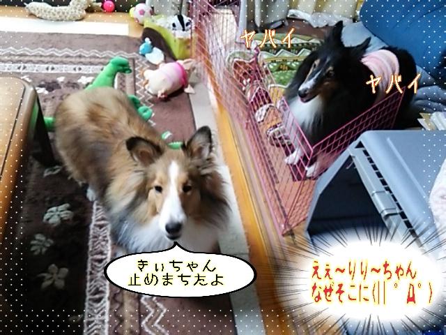 2014-10-22-13-02-51_deco.jpg