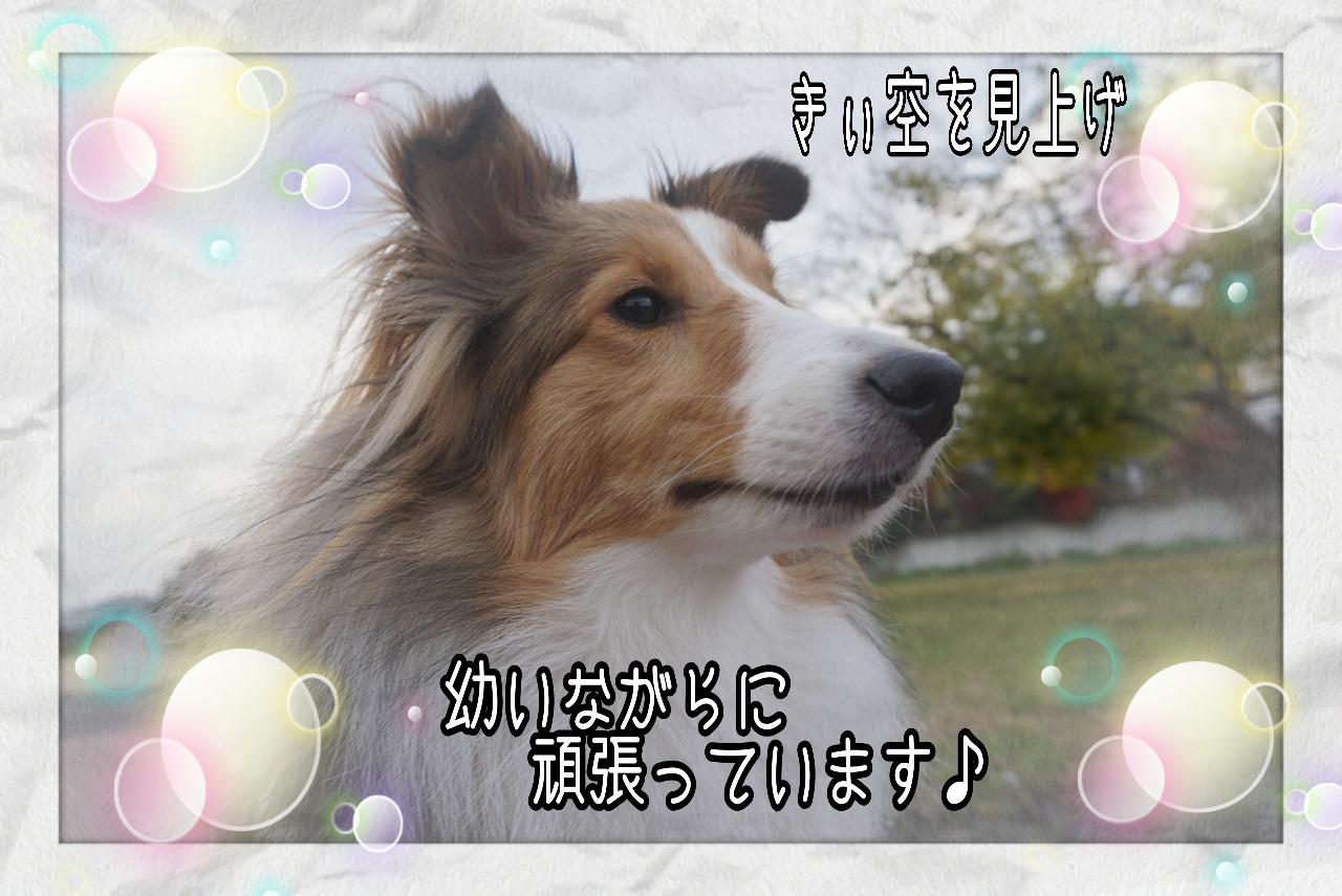 2014-11-29-11-46-20_deco.jpg