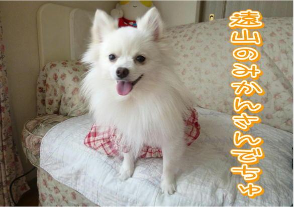 F11_20121001195710.jpg