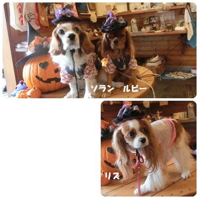 2014-10-169.jpg