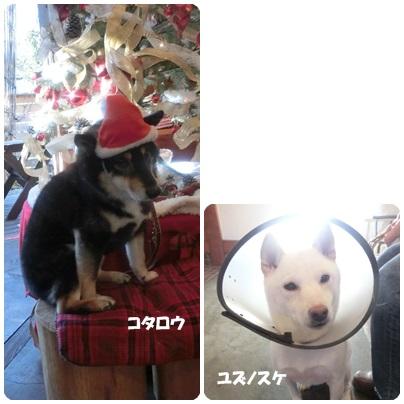2014-11-118.jpg