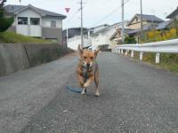 散歩20121030-1