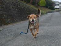 散歩20121030-2