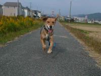 散歩20121030-4