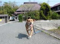 散歩20120423-1