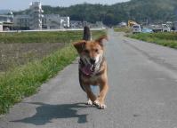 散歩20120423-4