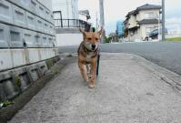 散歩20120422-2