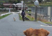 散歩20120422-4