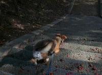 散歩20120424-3