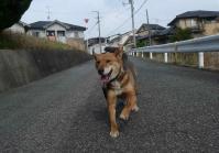 散歩20120425-2