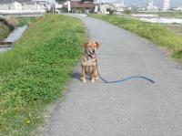 散歩20120425-4