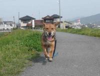 散歩20120425-5