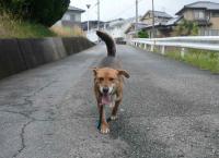 散歩20120426-1