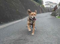 散歩20120426-2