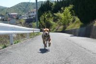 散歩20120427-2