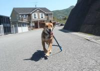 散歩20120427-3
