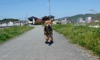 散歩20120427-5