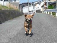 散歩20120428-1