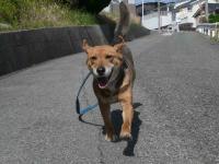 散歩20120428-2