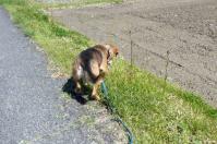 散歩20120428-3