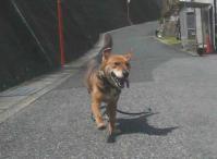 散歩20120429-2