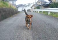 散歩20120526-2