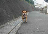 散歩20120526-3