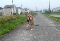 散歩20120526-4