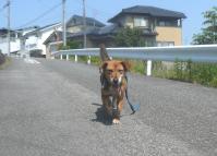 散歩20120527-1