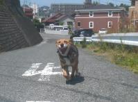 散歩20120527-2