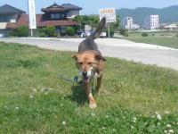 散歩20120527-3