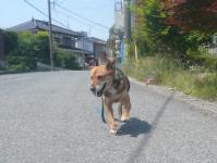 散歩20120527-5