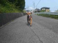 散歩20120529-1