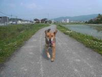 散歩20120529-2
