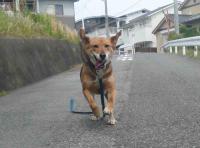 散歩20120530-1
