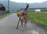 散歩20120530-2