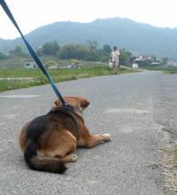 散歩20120530-4