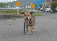 散歩20120530-5