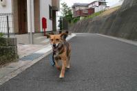 散歩20120531-1