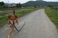 散歩20120531-2