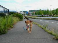 散歩20120619-2