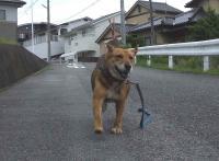 散歩20120620-1