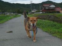 散歩20120620-4